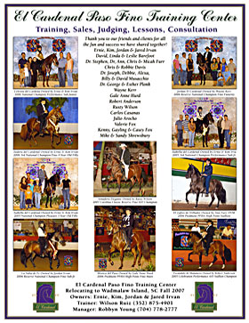 Horse Training Ad and Poster Design